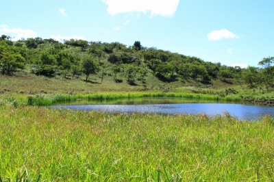 びわ湖バレイの蓬莱山から小女郎ケ池へ行ってきた!(大津市)トレッキング