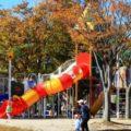 五個荘中央公園へ行ってきた!(東近江市)大型遊具や原っぱ、ローラー広場がある公園
