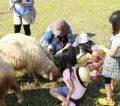 ローザンベリー多和田へ行ってきた!手作り体験や動物とのふれあい